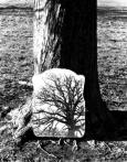 Tree, and mirror, Hertfordshire 1970