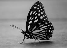 BorisWorkshop - Butterfly - Found on Flickr