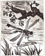 Pablo Picasso - La libellule (1936)